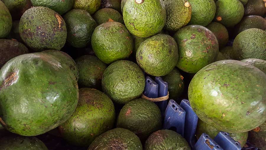 Avocado grown in Hawaii