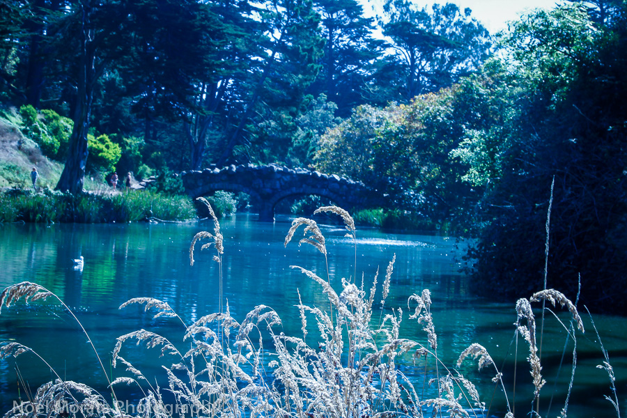 Stow Lake in Golden Gate park, Travel Photo Mondays #7