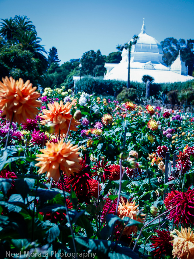 The Dahlia Dell in Golden Gate Park – Travel Photo Mondays #11