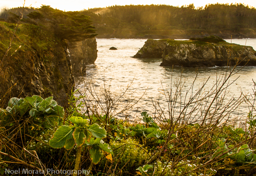 Coastal hike along the Mendocino coastline
