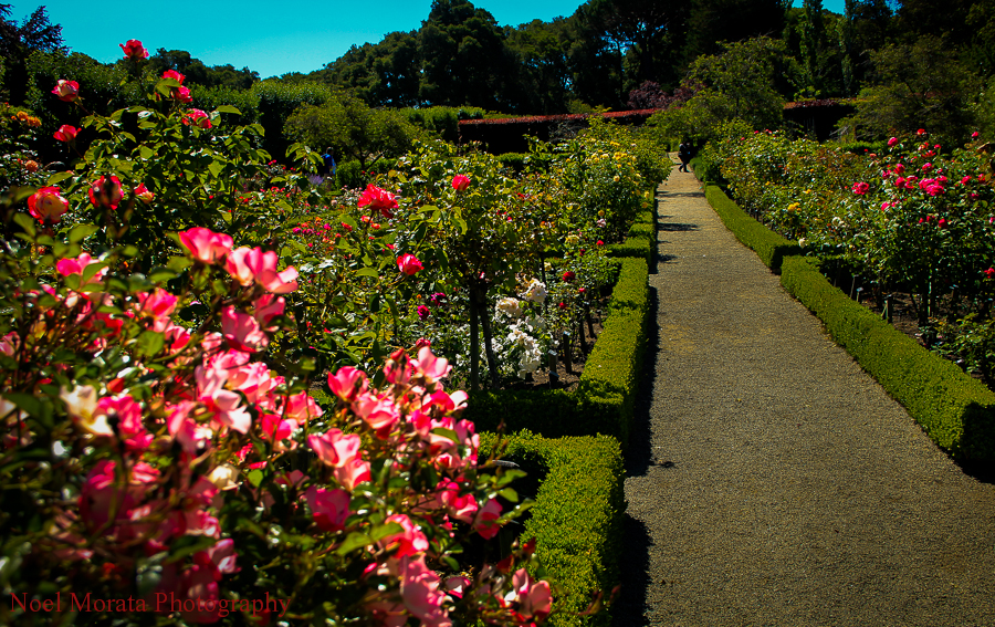 Filoli estate and gardens, Woodside