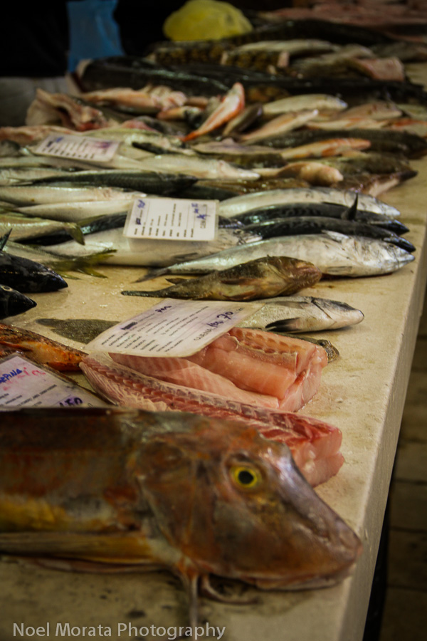 Different varieties of fish on display