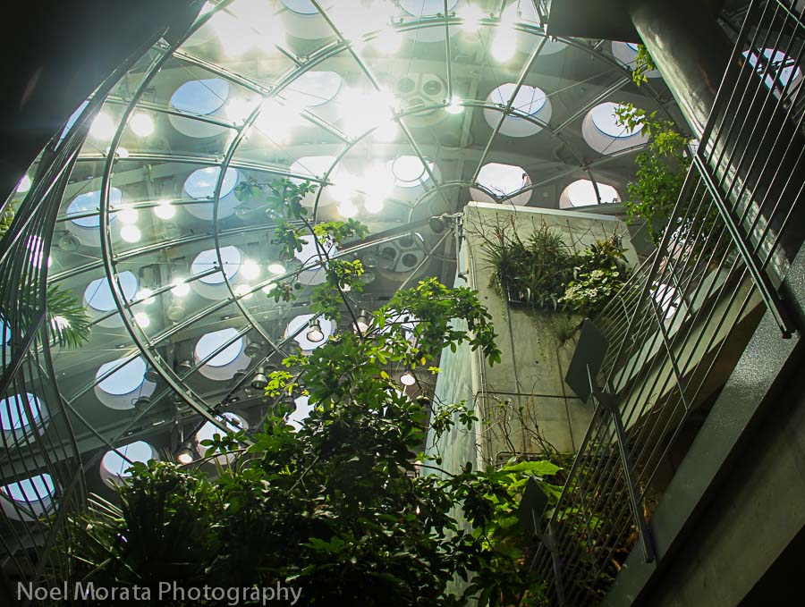 Inside the Rainforest of the world exhibit