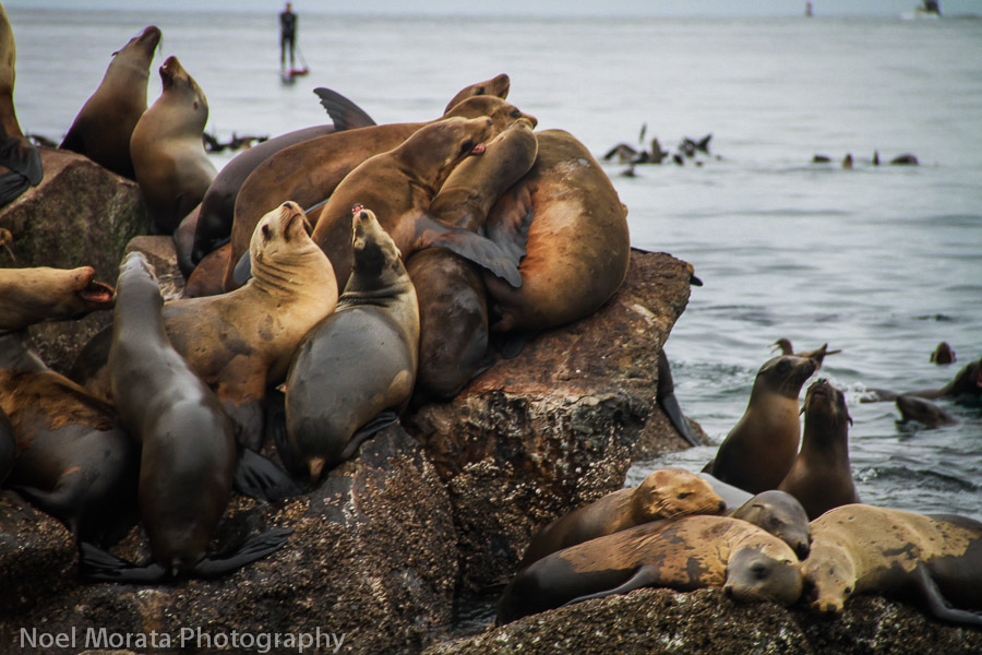 Hanging out at Monterey harbor