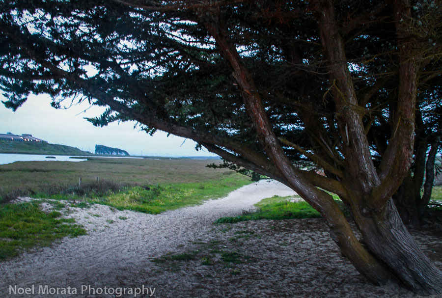 Following a trail along the estuary at Moss Landing