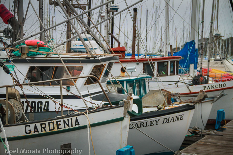 Fishing vessels at Moss Landing harbor