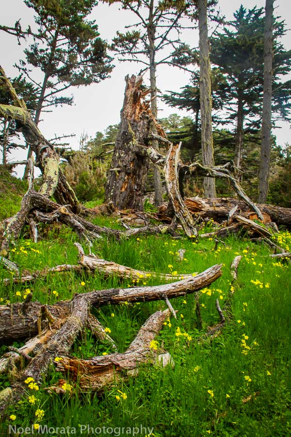 Gorgeous meadows at Point Lobos State Reserve