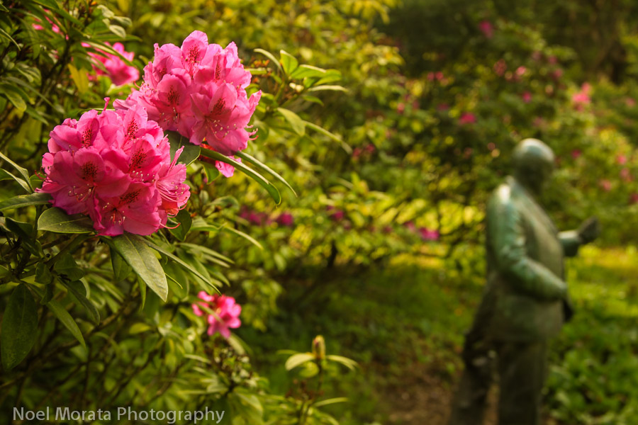 Rhododendron Dell and statue of John McLaren