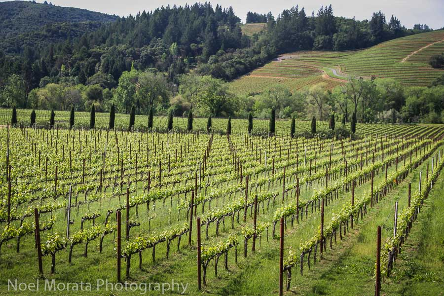 Wine tasting in Dry Creek Valley, Sonoma