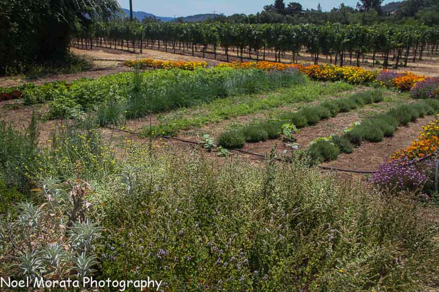 Farm to table fresh at St. Francis winery
