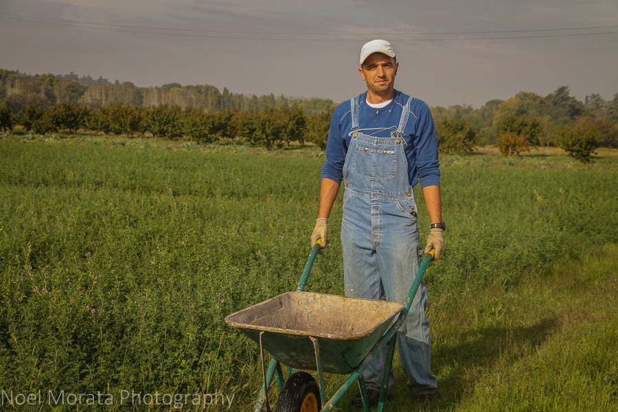 Working the fields at Podere San Giuliano