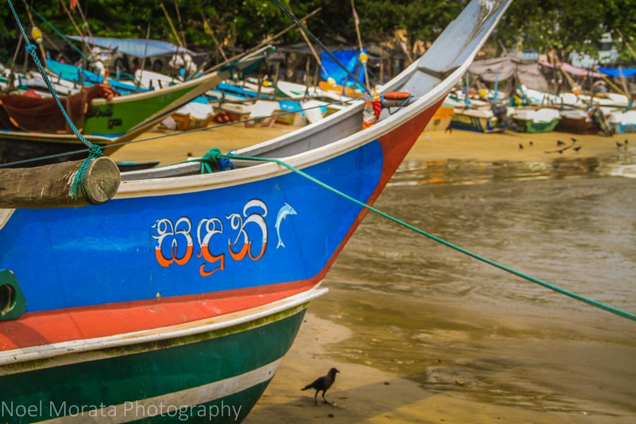 Colorful fishing boats in Galle, Sri Lanka