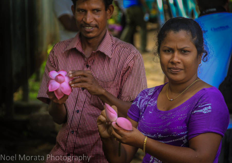 Preparing lotus blossoms for offerings that the Temple of the tooth