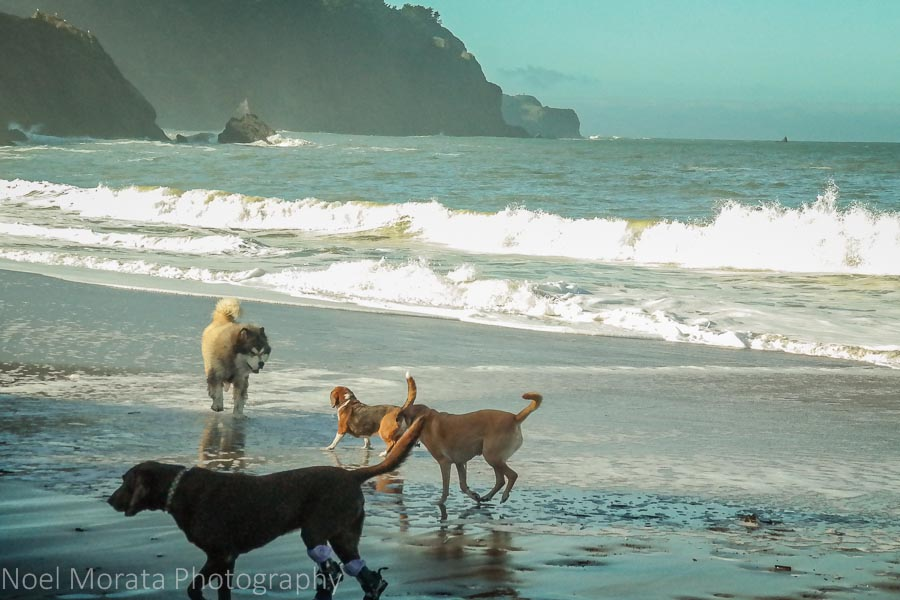 Doggie run time at Baker Beach, San Francisco
