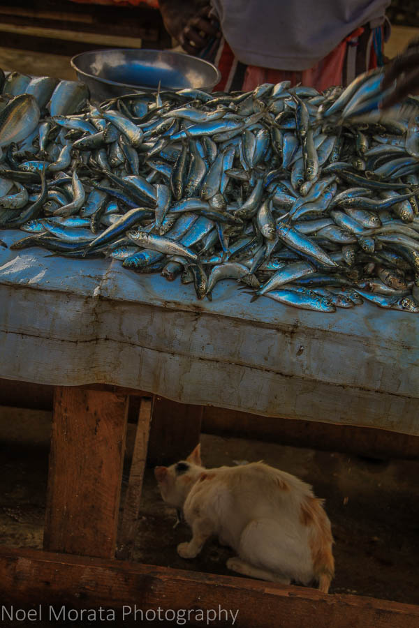 Cats and fish at the Negombo fish market