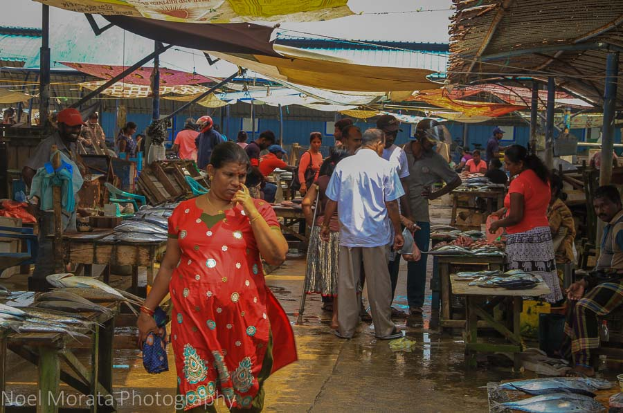 Exploring the Negombo fish market