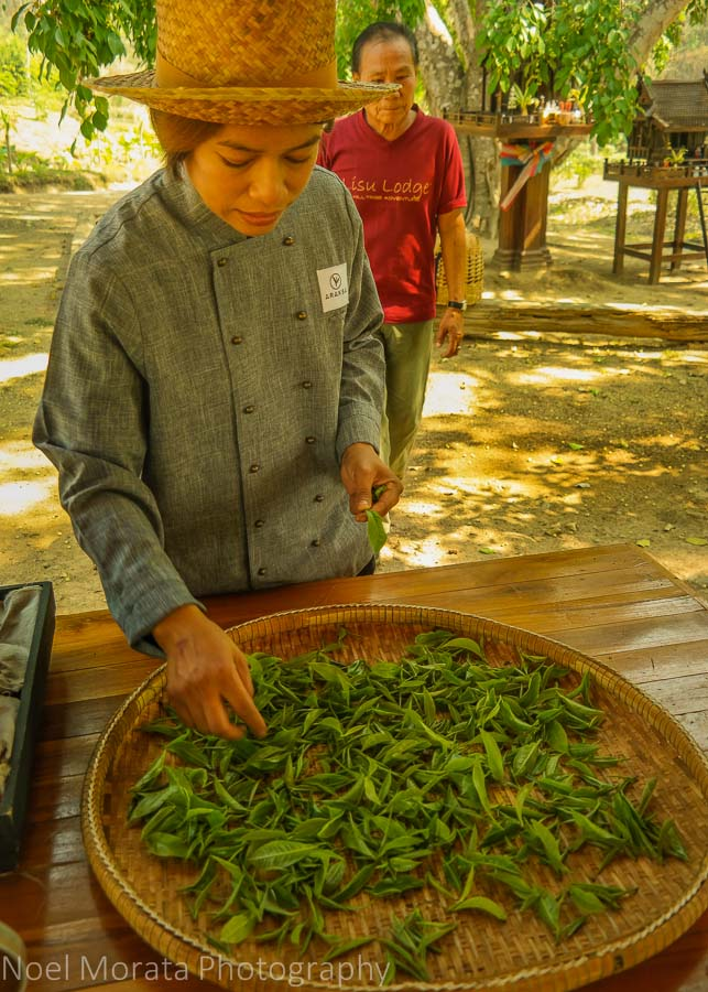 Picking rejects from the picked samples at Araksa Tea Plantation