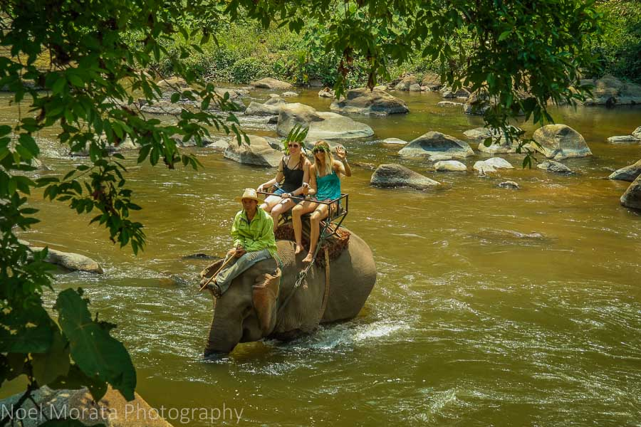 Elephant rides at Mae Taeng river