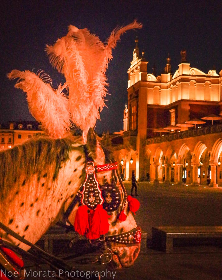 Beautiful horse and headdress detail in the old town, Krakow