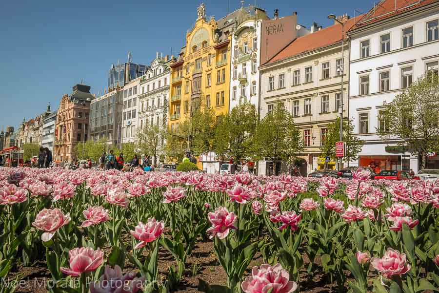Stroll along St. Wenceslas square