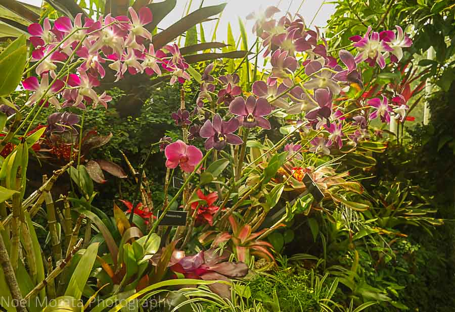 Collection of exotic orchids - Phipps conservatory tour