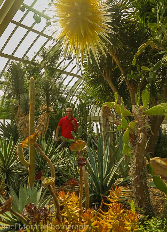 Posing in front of the Desert garden - Desert environment - Phipps conservatory, Pittsburg