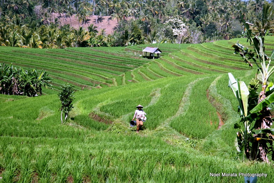 The rice paddies at Gunung Salak - Alila Journeys