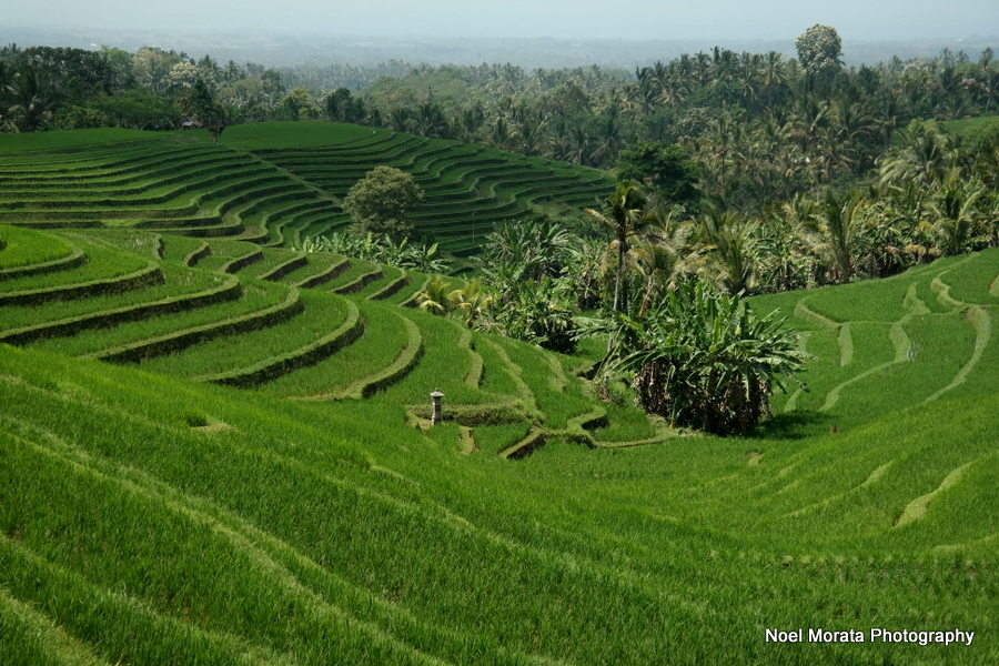 The paddy fields of Gunung Salak,Bali - Alila Journeys