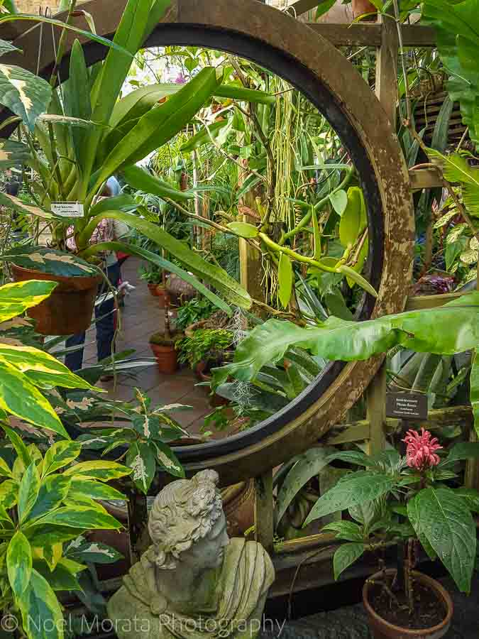 Conservatory of Flowers - Fun and unusual activities to do in San Francisco