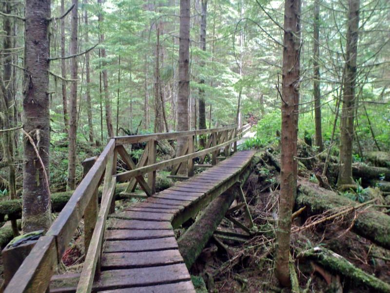 British Columbia's West Coast Trail exploring Boardwalk through old growth forest