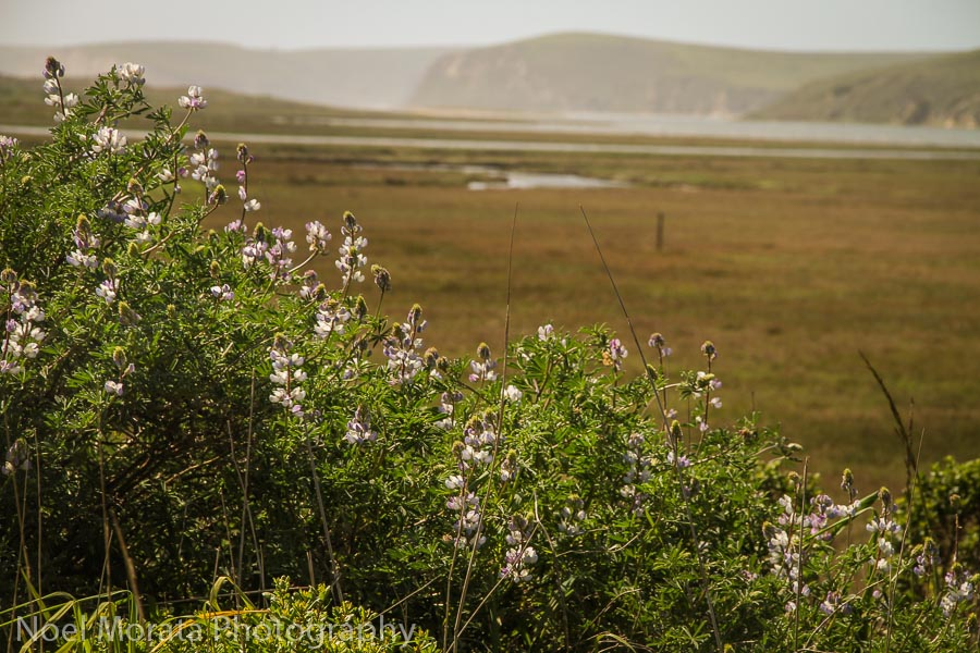 Point Reyes National Seashore Top road trips USA
