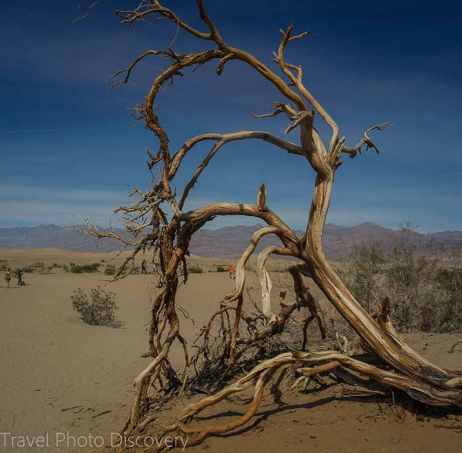 Dunes and dead trees at Death Valley National park