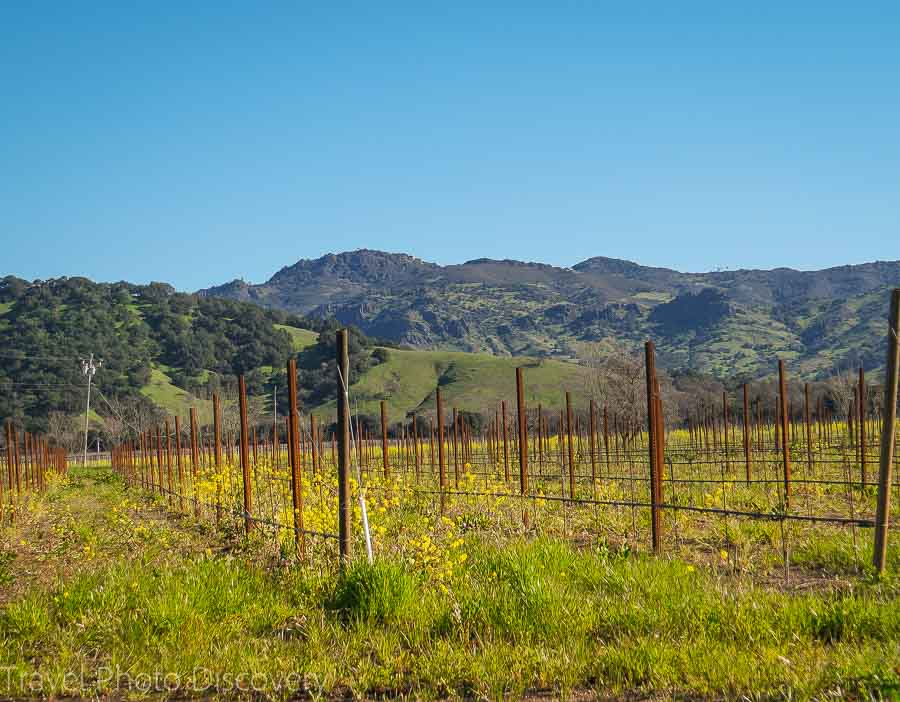 Napa wine tours with Viator tours