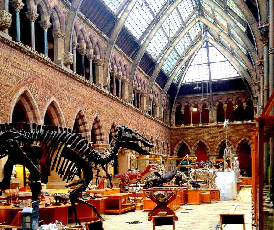 Places to visit Oxford at the Natural History Museum