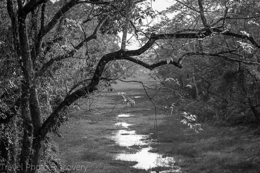 Beautiful landscapes at Chitwan National Park in black and white