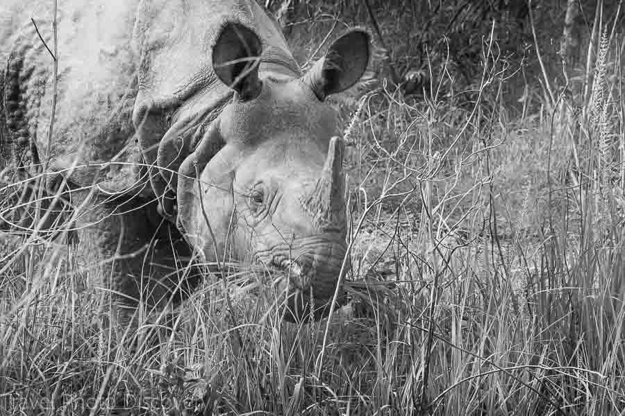 Rhino spotting at Chitwan National Park in black and white
