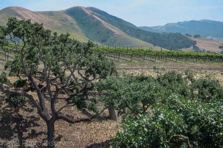 The back roads of Santa Barbara wine country and region