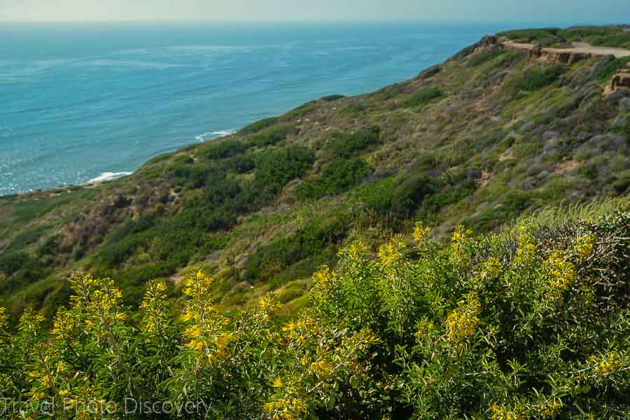 Exploring Point Loma in San Diego