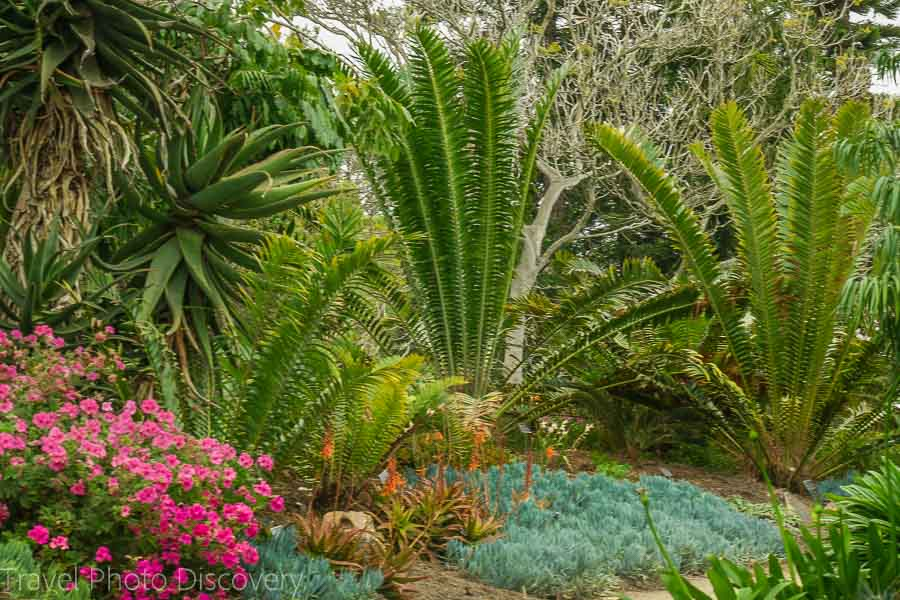 Annuals and cactus blooms at San Diego Botanical Garden