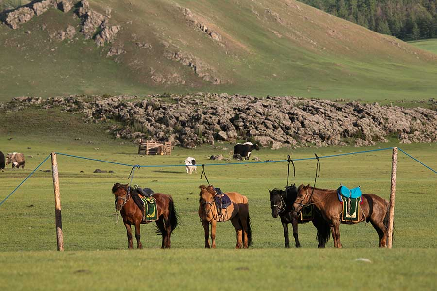 Adventure in Mongolia Horses Vail