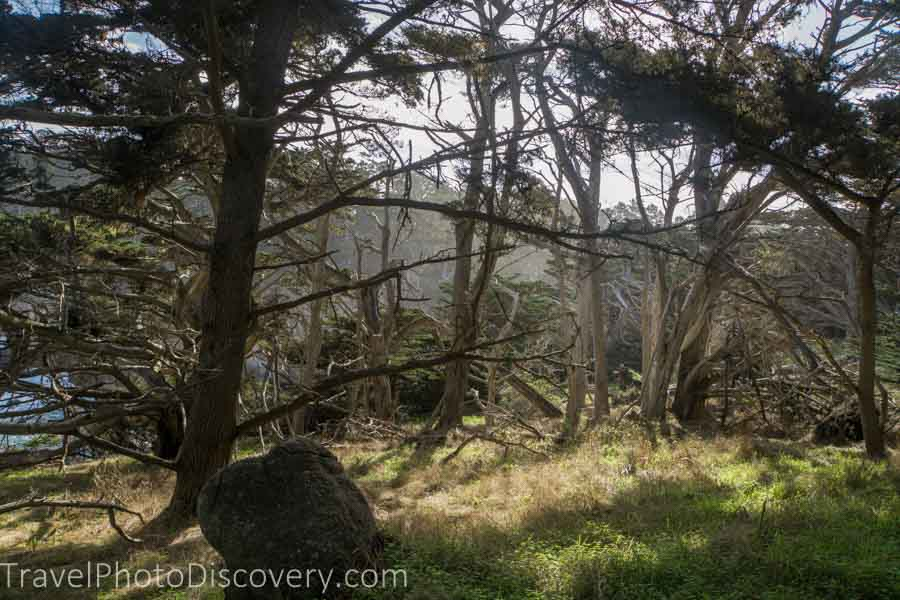 Quiet meadows at Point Lobos State Park