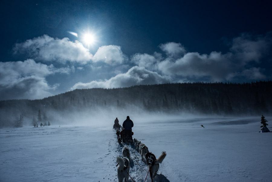 sweden-are-dogsledding adventure experience