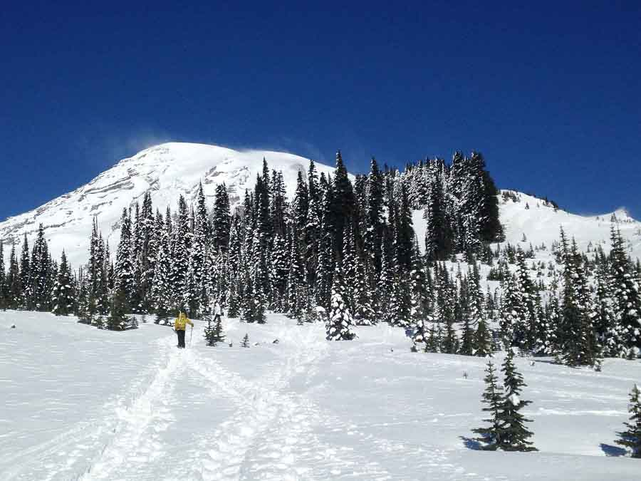 Mount-rainier-snowshoe-trees