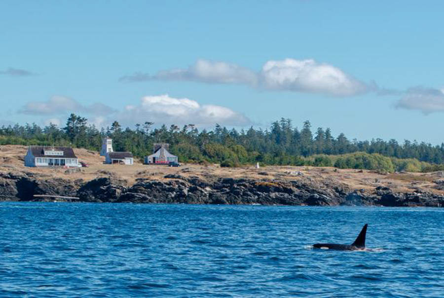 Orca watching at Puget Sound