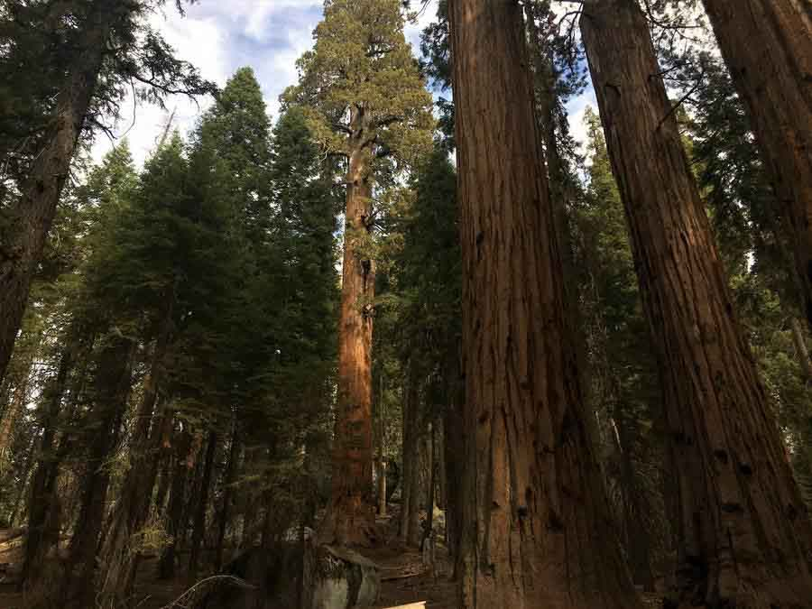 Sequoia National park adventure experience