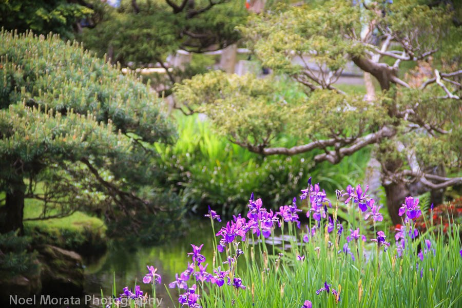 Japanese-gardens-at golden gate park