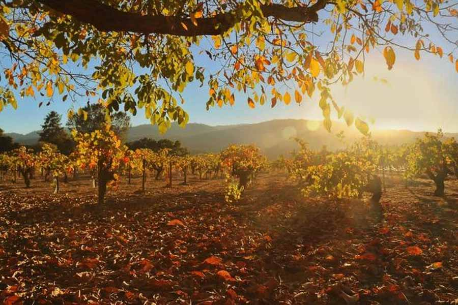 Napa Valley in fall time and fall colors