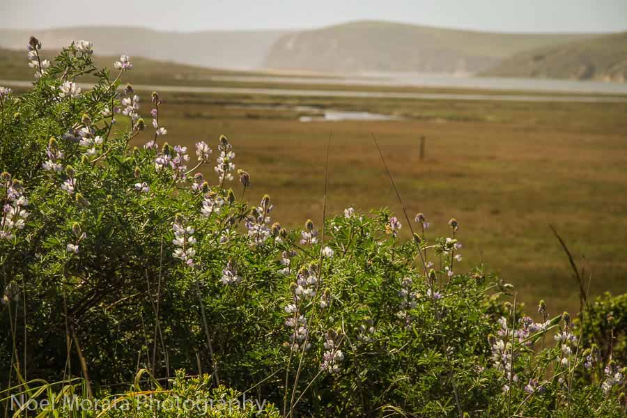 Point-Reyes hikes at this national seashore reserve