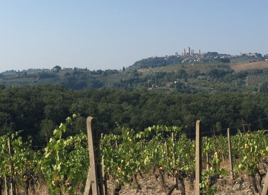 View of San Gimignano from the vineyards