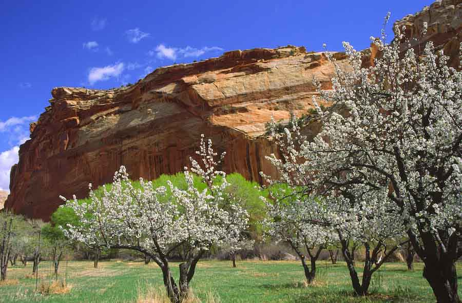 Capitol Reef in spring